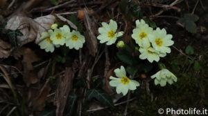 21 marzo primavera